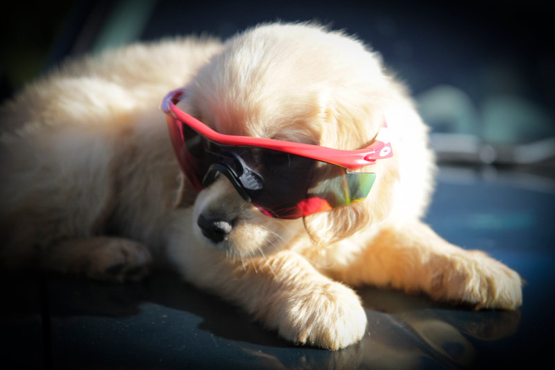 Oakley M2 Frame review image: M2 on puppy